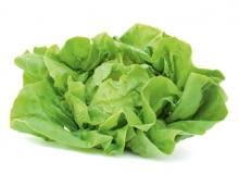 Sałata masłowa ma delikatne duże liście, jasno- lub ciemnozielone, aczasami czerwonawe. Środkowe tworzą luźną główkę. Świeże są lekko mięsiste iłagodne wsmaku. Łatwo tracą jędrność, np. po skropieniu cytryną czy polaniu sosem.
