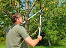 Sekatory z długimi uchwytami pozwalają ciąć nawet dość grube gałęzie drzew