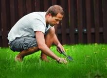 Zadbany trawnik jest oczkiem w głowie prawie każdego właściciela ogrodu.