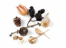 Stratyfikacja to wyrwanie nasion ze snu i przyśpieszenie kiełkowania. NASIONA wielu drzew, krzewów i bylin kiełkują słabo albo wcale, jeżeli nie były stratyfikowane
