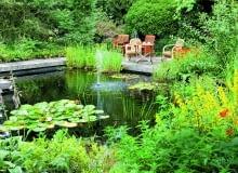 Ryby dobrze się czują w zbiorniku, w którym większa część lustra wody jest wolna od roślin.