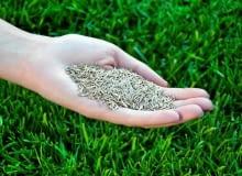 Zanim wysiejemy nasiona musimy mieć pewność, że podłoże jest oczyszczone z chwastów i śmieci