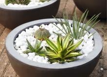 Succulents SLOWA KLUCZOWE: Kerne Luc Klinkhamer Perennial Steine Sukkulente eingetopft Hochformat