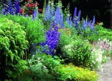 Mixed herbaceous border