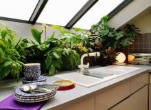 Houseplants below skylight window in modern attic kitchden SLOWA KLUCZOWE: INTERIORS INTERIOR detail KITCHENS TAPS CROCKERY PLANTS DETAIL DETAILS TOWN ATTICS LOFTS HOUSEPLANTS MODERN ZDJĘCIE DO WKŁADKI: Analogue