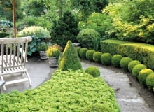 Wooden lounger on terrace beside border with Pachysandra terminalis and clipped Buxus topiary