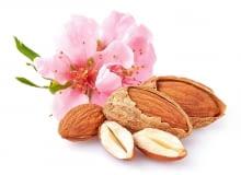 Migdały to pestkowce migdałowca pospolitego (Prunus dulcis). Zawierają wyjątkowo dużo witaminy E (opóźnia proces starzenia, nazywana więc jest witaminą młodości). Mają też sporo witaminy B2 (ważnej dla błon śluzowych i skóry), B3 oraz wapnia. Najwięcej antyoksydantów jest w ich skórce, lepiej więc jeść migdały nieobrane.