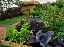 Warzywa uprawiane w dużych skrzyniach (m.in. kapusta, buraczki, jarmuż) starczą na domowe potrzeby.