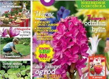 Magazyn Magnolia 2015