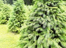 Sadząc drzewa, rozmieszczajmy je w odpowiednich odstępach.