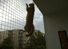 Siatka balkonowa dla kotów