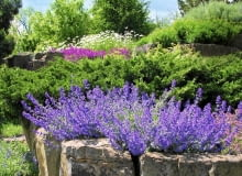 Kocimiętka i inne kwiaty kwitnące całe lato