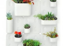 rośliny w mieszkaniu, design, ogrody pionowe, ogrody wertykalne
