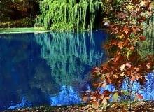 Złoto-czerwoną, jesienną aurę parku tworzą licznie rosnące tu kasztanowce, dęby, klony i lipy. Niektóre egzemplarze mają prawie sto lat - pierwsze drezwa posadzono bowiem w 1907 r.