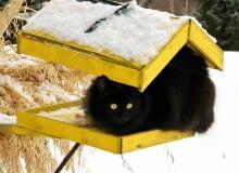 Dopóki leży śnieg i jest mróz, dokarmiamy ptaki, ale tak, by nie dopadły ich koty