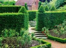 żywopłot, w ogrodzie