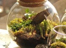 Mossarium - leśna kula z bluszczem, szafirkami, rypsalisem i kępkami mchu. Średnica kuli 25cm - pokrywka korkowa.