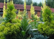 W centralnej części ogrodu znajduje się duży gołębnik dla gołębi pocztowych oraz ogrodowa altana.
