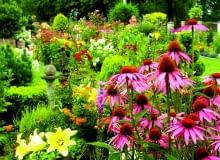 Jeżówki to moje ukochane kwiaty lata. Są mało wymagające, odporne na zmienne warunki atmosferyczne i jakie piękne!