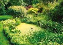 staw w ogrodzie, sadzawka