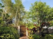 Drzewa przy ogrodzeniu