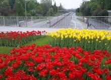 Kwietnik w kolorach Warszawy
