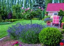 Lawendy i róże posadzono bliżej tarasu, a w bogatą otulinę ogrodowego wnętrza wpisano kolorowe liściaste krzewy.