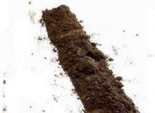 Ziemia torfowa próchniczna jest żyzna, dobrze utrzymuje wilgoć i jest łatwo przepuszczalna. Ma gruzełkowatą strukturę