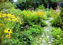 Spora część moich roślin to samosiejki, świetnie podkreślające wiejski charakter ogrodu.