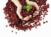 Owoce z wrzosowiska
