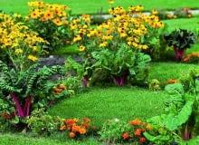 Zwalczanie plamistości roślin warto zacząć już przy pierwszych objawach