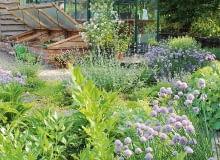 W czerwcu Ogród Bellingham na Kaszubach otwarty jest w soboty w godz. 12.00-16.00