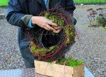 1. Zrobienie wianka ułatwia mi obręcz z wierzbowych pędów (wykorzystuję ją kilka razy jako podkład). Aby wyglądała świeżo, wplatam w nią młode gałęzie brzózek i czerwone pędy derenia białego odmiany 'Sibirica'. Dodaję też mech - spełnia on również funkcję wilgotnej naturalnej gąbki florystycznej.