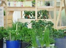 Warzywa i zioła z własnej doniczki