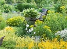 Ta rabata utrzymana jest wjasnożółtej tonacji. Królują na niej kwitnące wiosną wilczomlecze oraz drobnokwiatowe pszonaki. Wkoszu umieszczono funkię ożółtoobrzeżonych liściach, niżej biały zawilec iżółte tulipany.