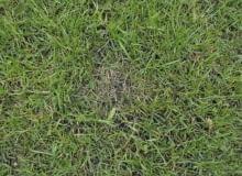 Trawnik. Plamy na trawniku