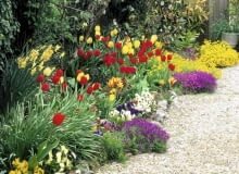 Colourful spring border with Tulipa, Narcissus and Alyssum