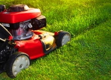Jak pielęgnować trawnik latem?