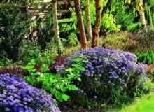 dodatki, ogród, akcesoria ogrodowe, donica
