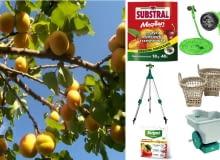 Kolaż drzewka owocowe