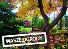 Jesień w naszym ogrodzie ma mnóstwo uroku. Lubię cieszyć się nią na ławeczce pod olbrzymim orzechem