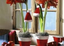 Amaryllist^pfe mit Weihnachtsdeko SLOWA KLUCZOWE: Advent Amaryllis Blume Blumen Dekoration Feiertage Fenster Florales Geschirr Hippeastrum M´tze Niemand Pflanze Pflanzen Tablett Topfblume Topfblumen Topfpflanze Topfpflanzen Weihnachten Weihnachtsdekoration Weihnachtsmannm´tze Weihnachtspflanzen Weihnachtsschmuck Zimmerpflanze Zimmerpflanzen adventlich floral weihnachtlich <bertopf <bert^pfe Hochformat