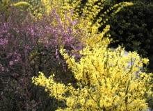 01A6QM5N - flower, landscape, spring, season, scene, yellow flower, nature