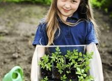Wysadzamy rozsadę warzyw. Dzień wcześniej rośliny dobrze podlejmy - dzięki temu lepiej się przyjmą.