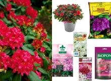 nasiona oraz ziemia do rododendronów