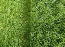 Pielęgnacja trawnika wymaga regularnego podlewania, koszenia i nawożenia. A także dbania, by trawy nie zniszczyły krety czy przerastający ją mech
