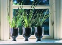 Tatarak trawiasty (Acorus gramineus) w prostej powtarzalnej kompozycji. Jest to roślina wodna lub bagienna. Lubi podłoże mocno wilgotne i nasłonecznione stanowisko