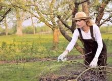 Na pewno podczas wiosennych porządków trzeba zwrócić uwagę na nasze drzewa oraz krzewy.
