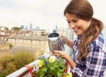 Na wietrznych balkonach rośliny narażone są na silne wiatry, które przyczyniają się do szybkiego wysychania podłoża w skrzynkach.