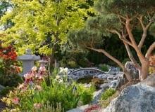 zdjęcia mogą być użyte tylko w artykule Ogród z Kraju Kwitnącej Wiśni - niekończąca się historia na serwisie Ogrody (czas publikacji: do 01.10.2007r)
